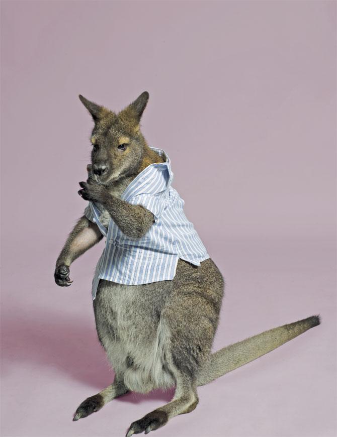 http://1.bp.blogspot.com/__wgTdCCrfeY/S8aPaS4LzqI/AAAAAAAAGAo/3YcVd3GNMuo/s1600/kangaroo-in-striped-shirt.jpg