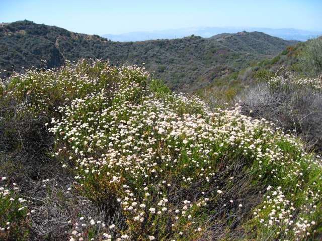 brian and ashley u0026 39 s hiking blog   orange county native plant information  part 1