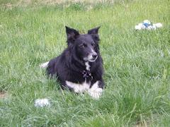Zena (9 years old)