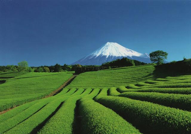 JP007-Mount_Fuji.jpg (1600×1117)