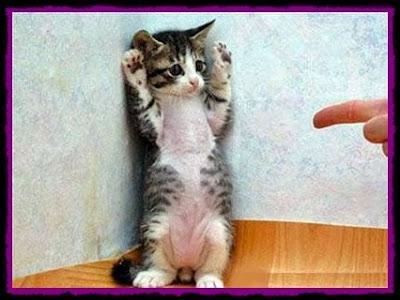 kucing angkat tangan comel