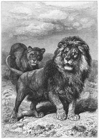 Animales Extintos 1865-leon-del-cabo