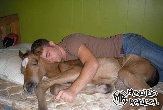 Images Of Mulher Transando Cavalos E Animais Um Cavalo