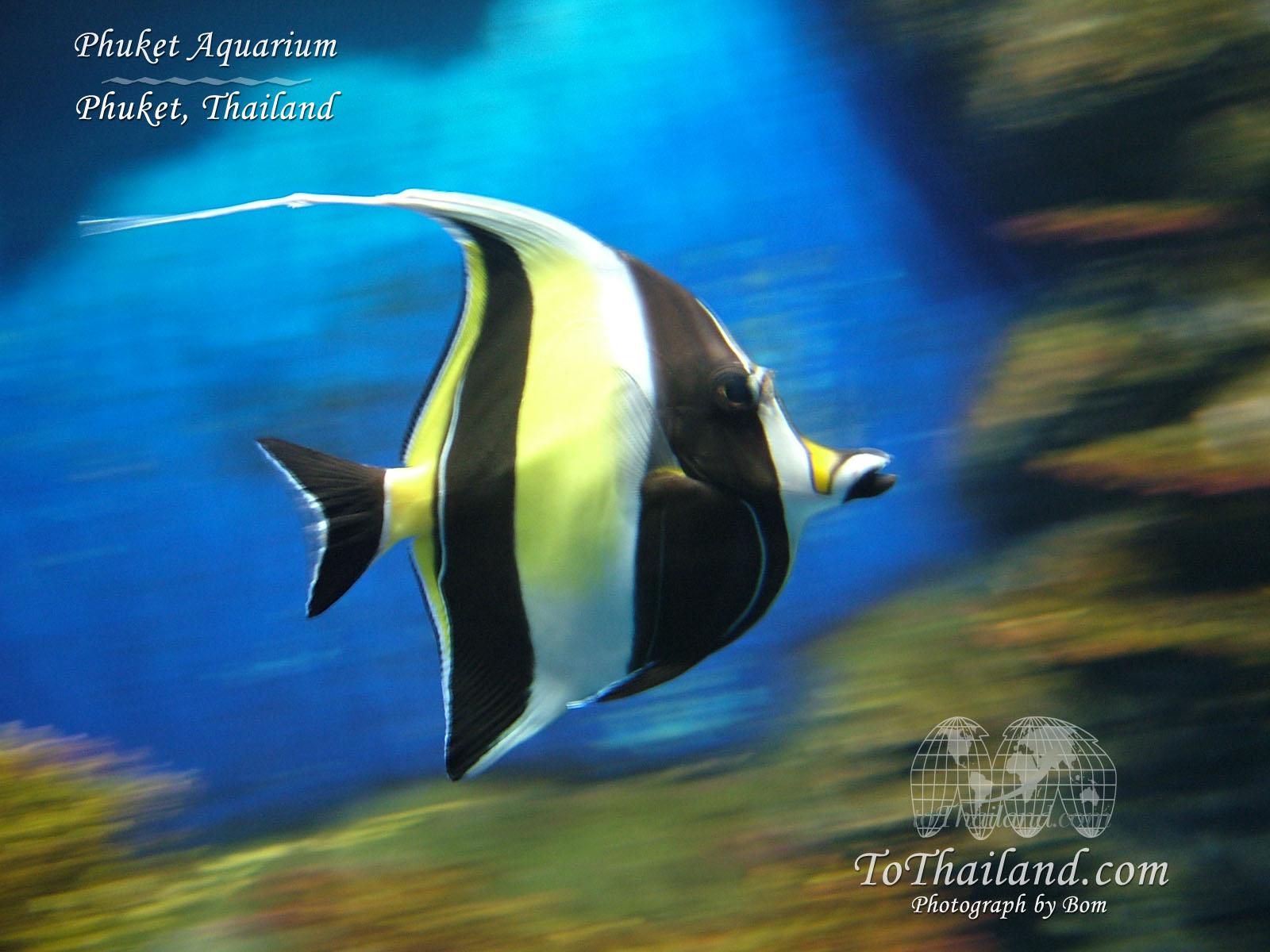 Phuket thailand wallpaper desinow 39 s blog for Jb tropical fish