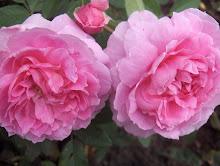 Mary Rose Austinros