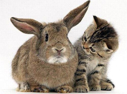 megapost de imagenes de gatos tiernos vol.8 - Taringa!