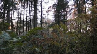Skoven for længe siden