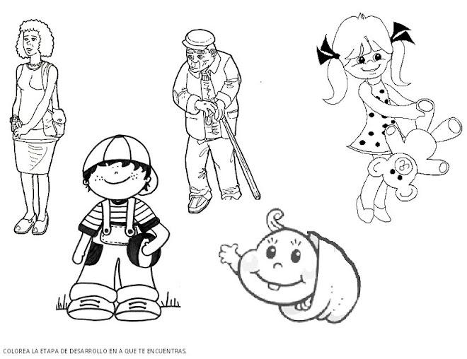 Dibujos para colorear etapas del desarrollo humano - Imagui