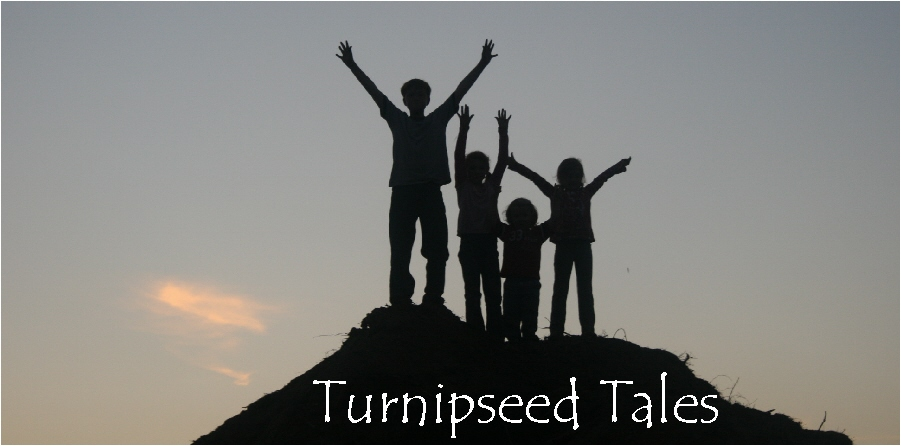 Turnipseed Tales