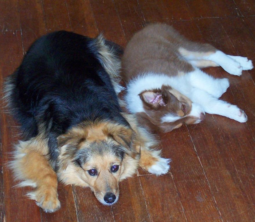 Dog Owner Dresses Like Dogs Favorit Toy