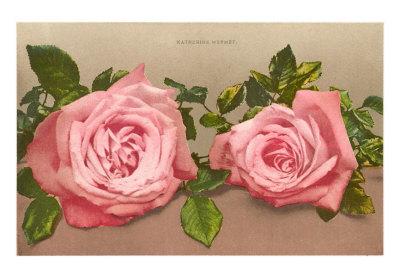 """""""As rosas não falam, simplesmente exalam o perfume que roubam de ti."""""""