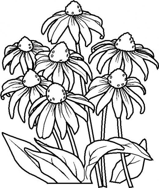 Dibujos para colorear: Dibujos para colorear - Flores - Margaritas