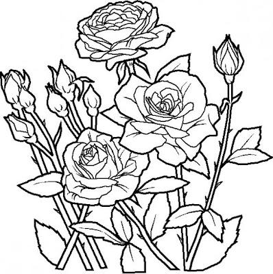 Dibujos para colorear: Dibujos para colorear - Flores - Rosas