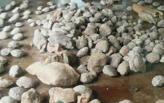Shell Fossil Graveyard