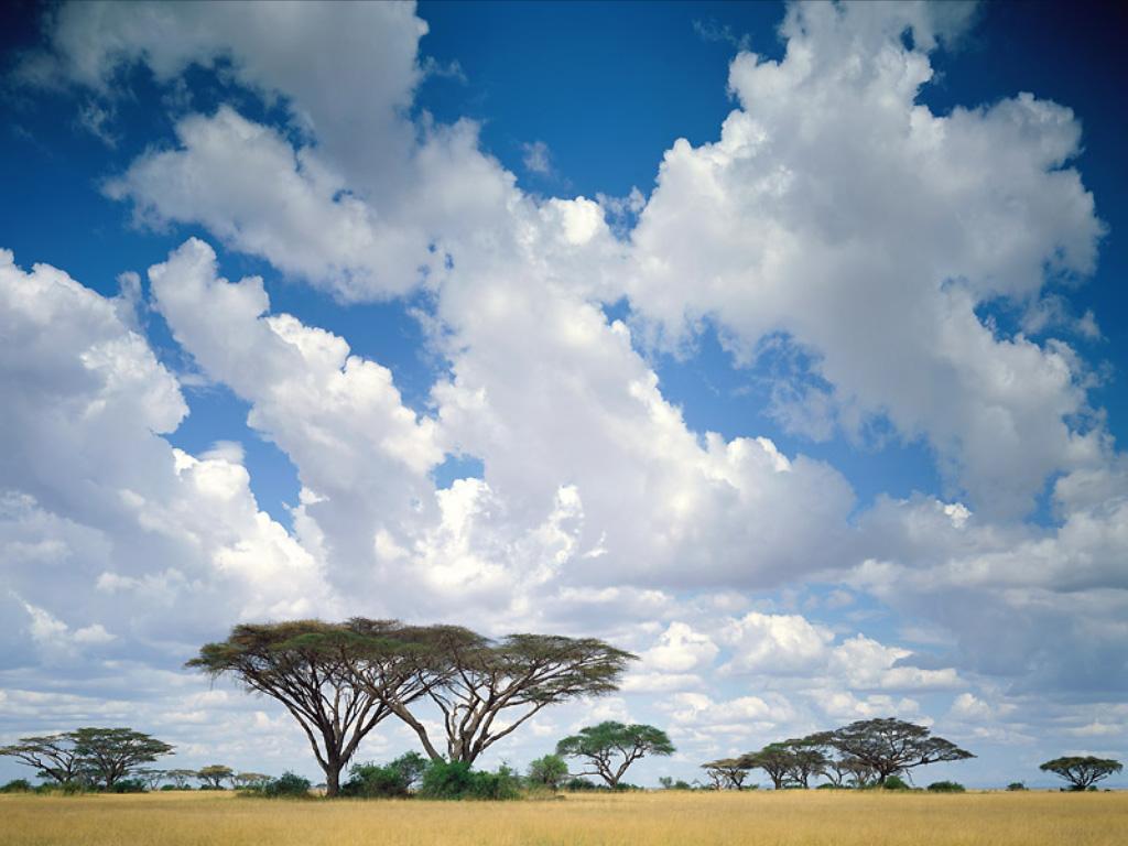http://1.bp.blogspot.com/_a6VtCAw0YXg/TEKqT9G9kBI/AAAAAAAADhU/tzoX3HVsjuQ/s1600/kenia.jpg