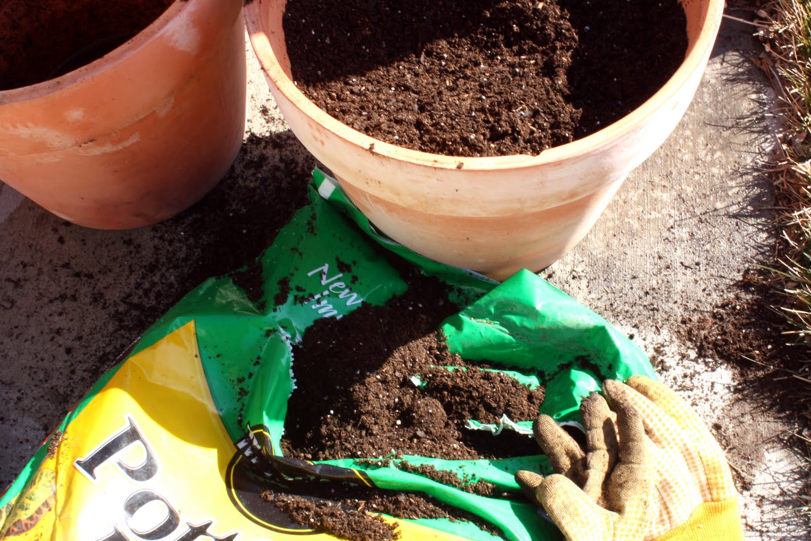 The parsimonious princess container gardening 101 and for Potting soil