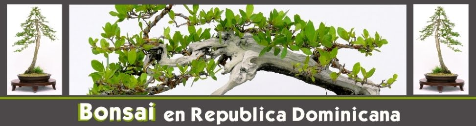 Bonsai en Republica Dominicana