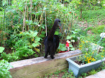 jardin pequeno y gato gordo