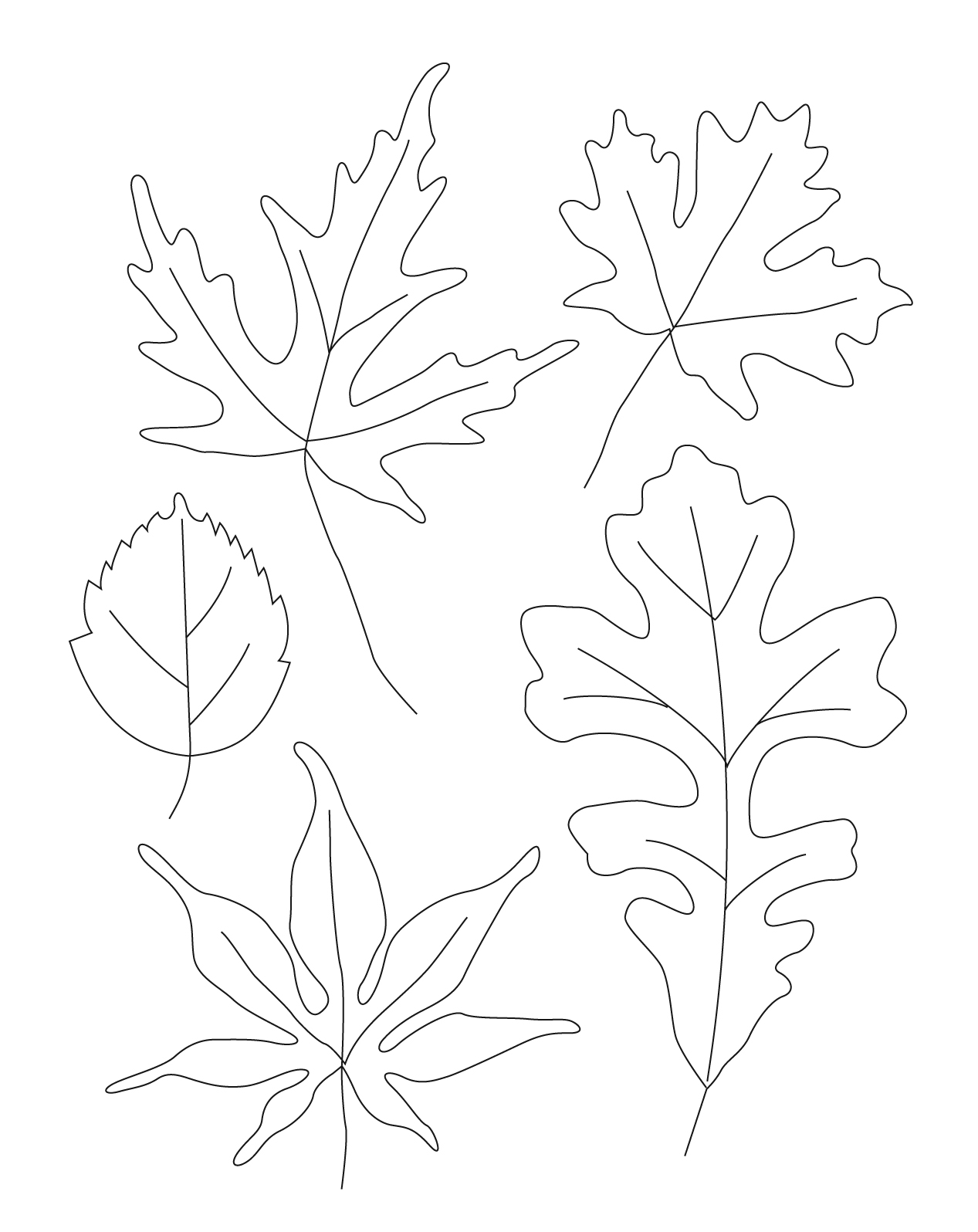 Uncategorized Leaves To Draw contour leaf drawings welcome to ms longs class picture