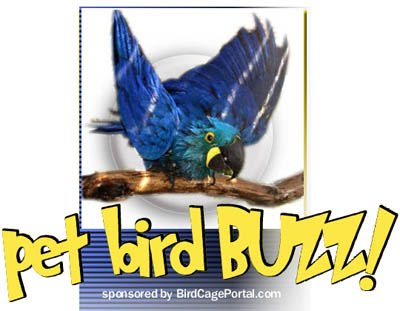 PET BIRD BUZZ!