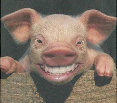cerdo_reir1.jpg