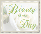 "Wyróżnienie ""Beauty of the Day"""