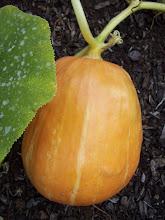 big orange!