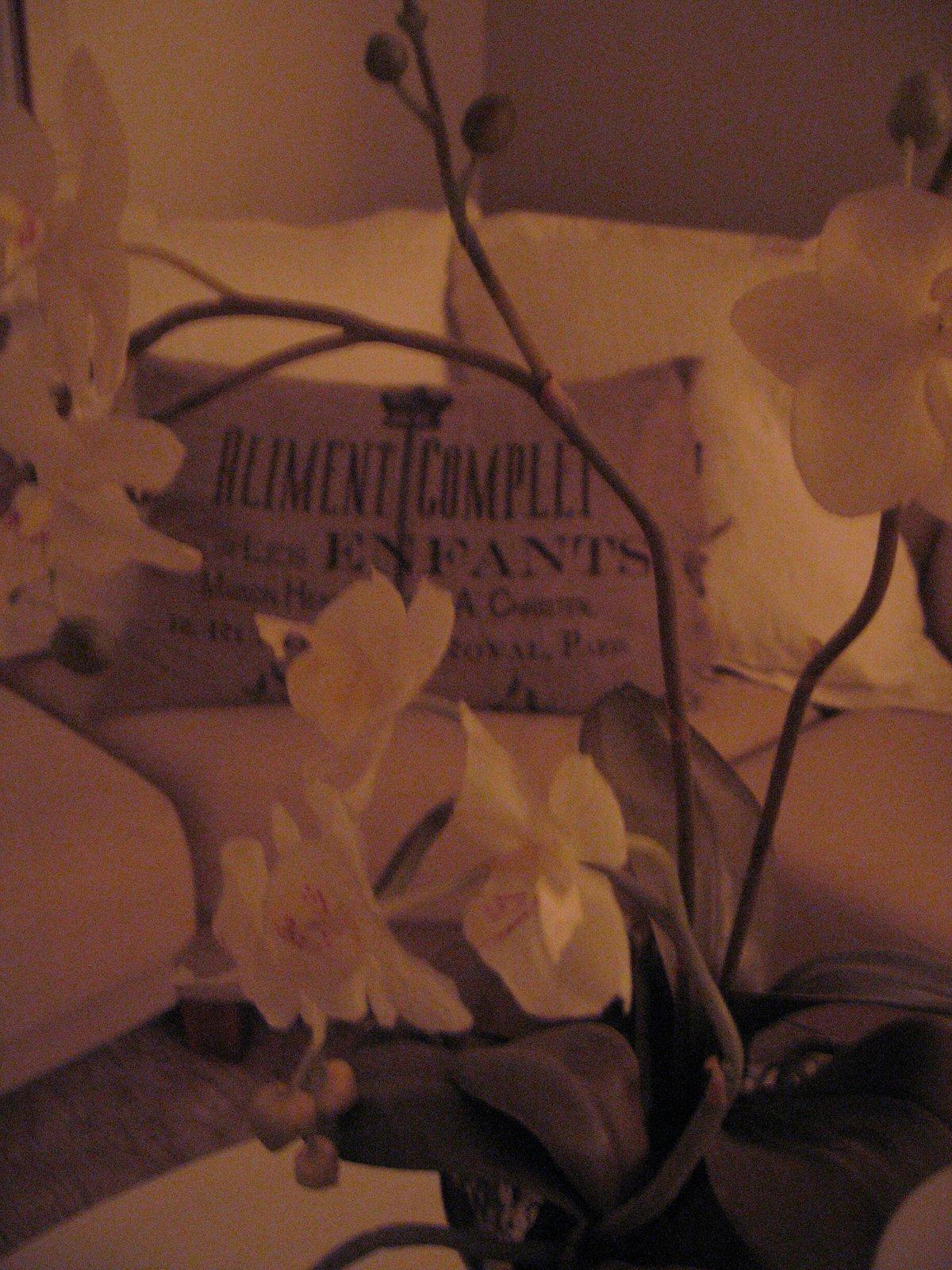 Vinter vita orkideer....