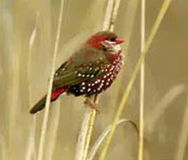 Sariska Birding Tour