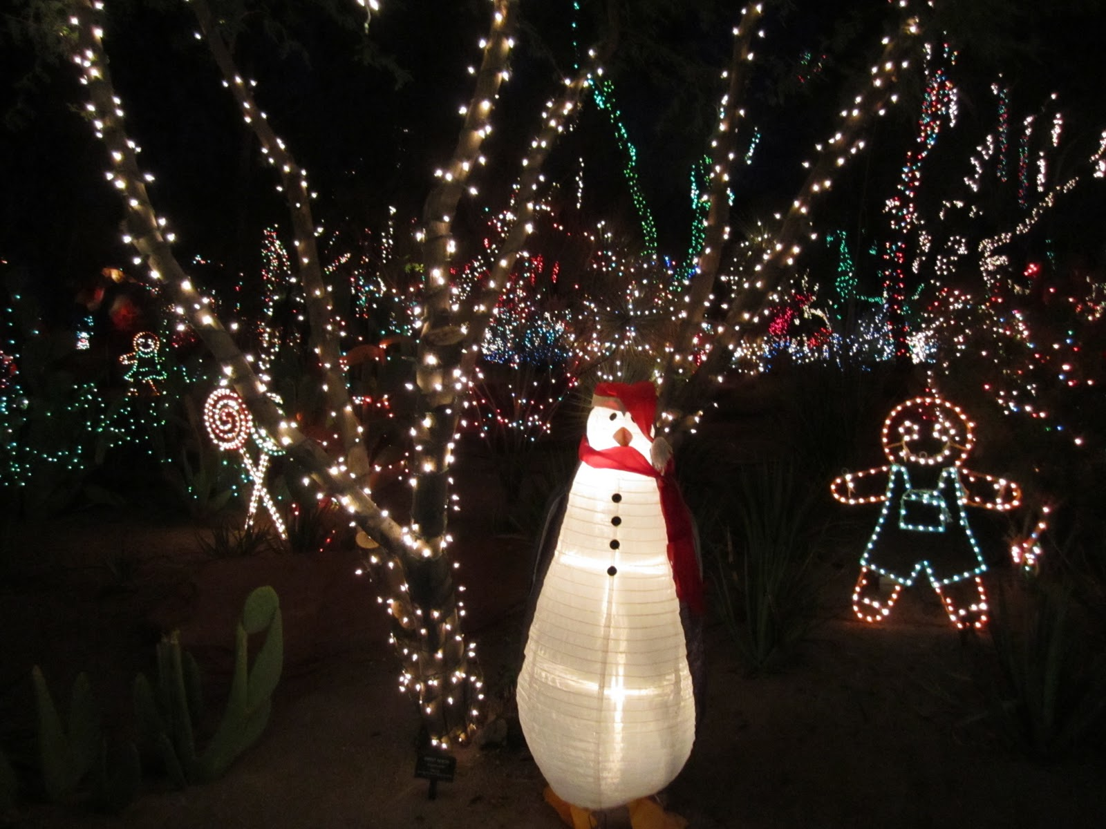 Cactus Garden Lights {Christmas Tradition} - Wendys Hat