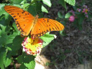 Hochzeitsbrauch: Schmetterlinge fliegen lassen - Bild: Shannah Pace/SXC.hu