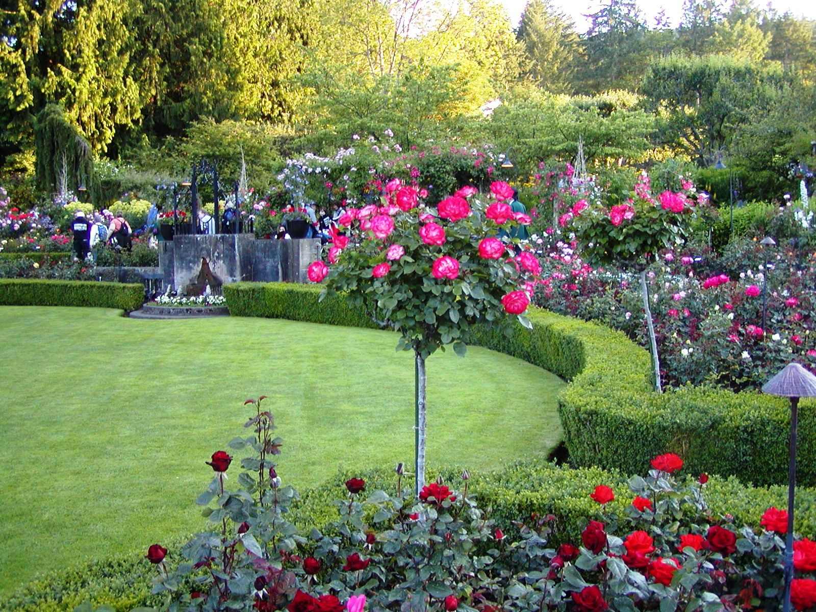 He Rose Garden Puts Me On Scenic Overload It 39 S Almost Too Much To