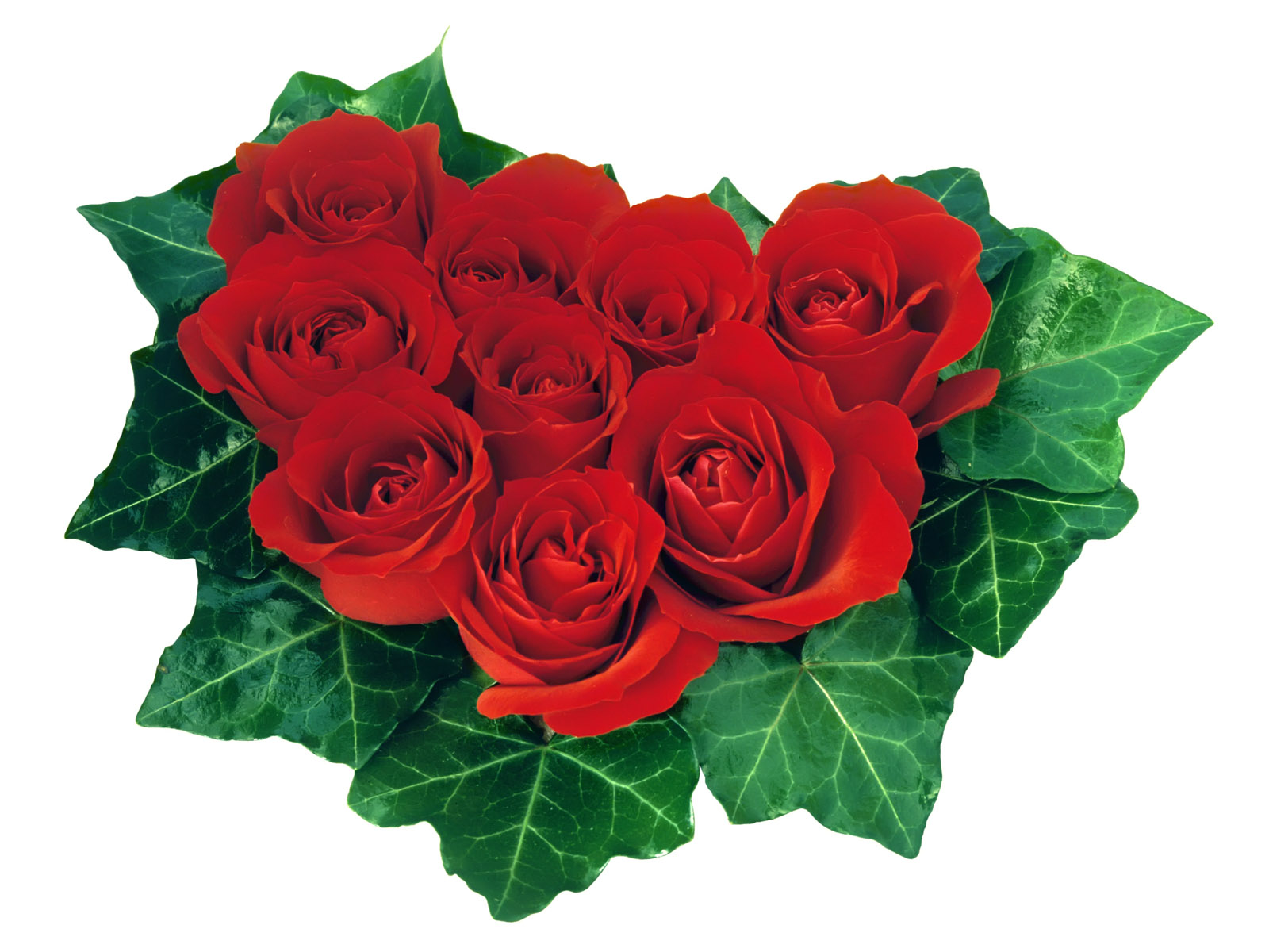Valentine 39 s Day Red Roses ECards