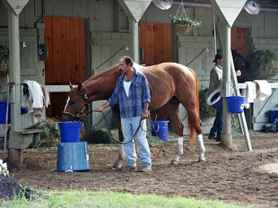 curlin at oklahoma training track