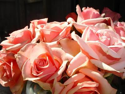 blushing hostess roses