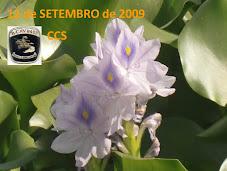 ENCONTRO DA CCS DO BATALHÃO DE CAVALARIA  8423