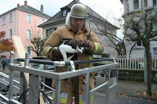 Cat rescued pictures