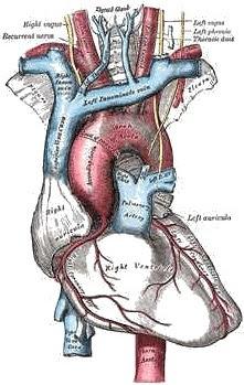 Sistem Predaran Darah