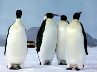 Pelajaran Hidup, Makna Kesetian Dari Hewan Bernama Penguin