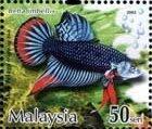 http://1.bp.blogspot.com/_aMOsxUFmdcI/SEl5IrqDtDI/AAAAAAAAANM/Rfhqf3INHUI/s320/FightingFish_LocalFightingFish_50sen.jpg