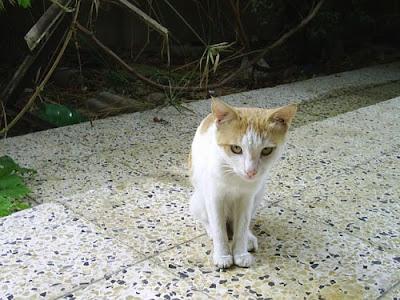 white caty