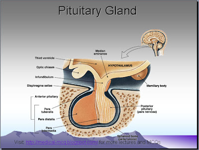pituitary gland , physiology lectures | Medical MCQs for exams