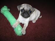 Puppy Arlo