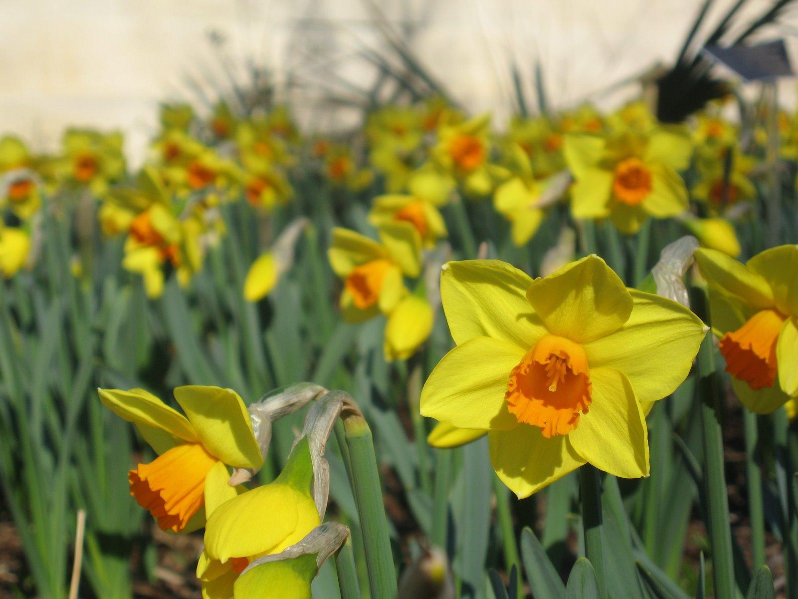 [USBG+Spring+-+N+'Brackenhurst'+2.jpg]