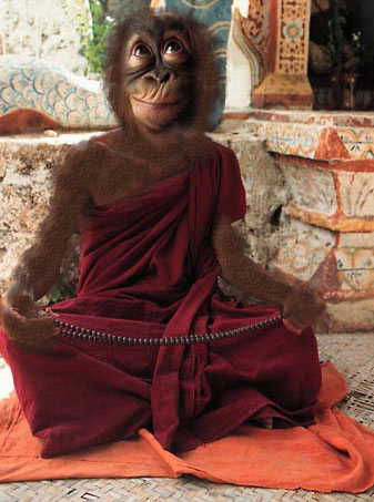 Meditating-monk-ey - The Power of Meditation - Tira-Pasagad | Saksak-Sinagol