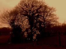 sepia-tone-oaks