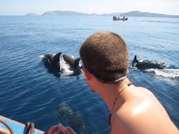 Delfines Silvestres