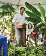Declara Reserva Agricola de Yabucoa