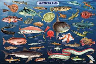 the adaptations to marine life across different phyla Diversity echinodermata has approximately 7000 described living species and about 13,000 extinct species known from the fossil record this phylum is the largest without any freshwater or terrestrial forms (brusca and brusca, 2003 waggoner, 1999)geographic range mainly a marine group, echinoderms are found in all the oceans.