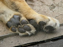Pussy paws